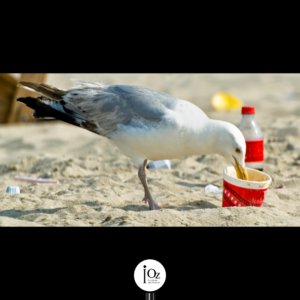 Goéland qui mange dans un gobelet en plastique