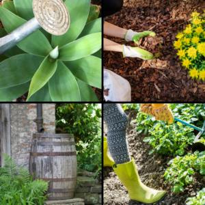 Montage de 4 images, 4 solutions pour économiser l'eau dans son jardin